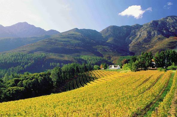 Franschhoek vineyards in the Cape Winelands.